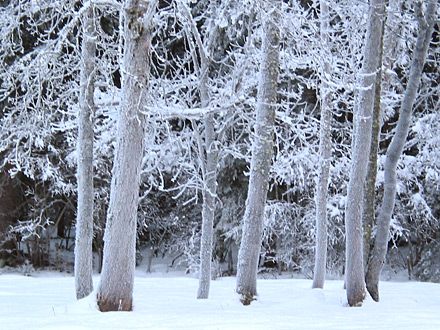 winter_baeume